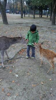 鹿せんべいをあげる.jpg